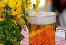 Как приготовить безалкогольное Березовое пиво